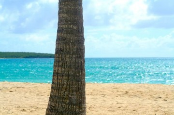 vieques, puerto rico, tree, beach