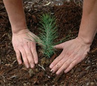 Volunteer plants tree in national park