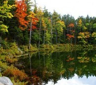 Celebrating 50 Years of Leaf-Peeping