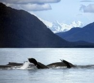 Paddling the Alaskan Food Chain