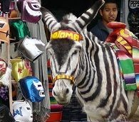 Tijuana Embraces its Touristy 'Zonkeys'