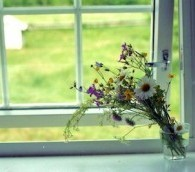 flowers window